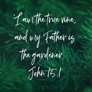 I am the true vine, and my Father is the gardener. John 15:1